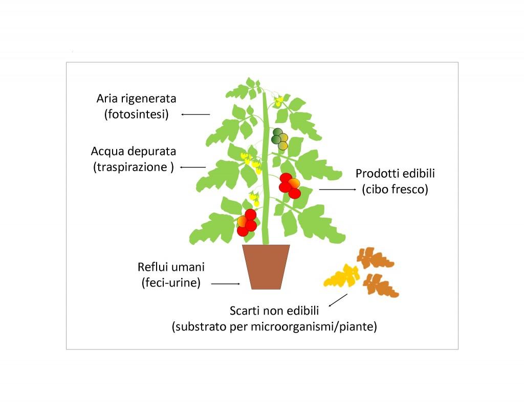 Figura Sistemi e Tecniche di coltivazione Italiano